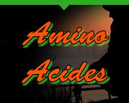 Amino Acides